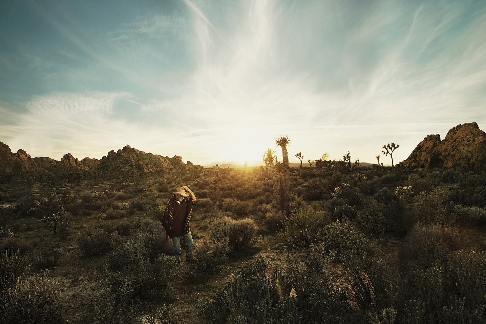 Justin James Muir - Joshua Tree 2